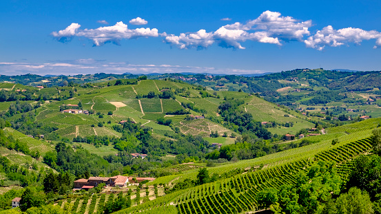 Piedmont - Italy「Vineyards in the Langhe, a hilly area mostly based on vine cultivation and well known for the production of Barolo wine. Piedmont, Italy」:スマホ壁紙(1)