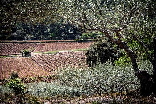 Savoie「Vineyards in Provence」:スマホ壁紙(13)
