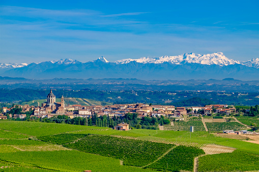 Piedmont - Italy「Vineyards in the Monferrato, a hilly area mostly based on vine cultivation. Province of Alessandria, Piedmont, Italy」:スマホ壁紙(14)