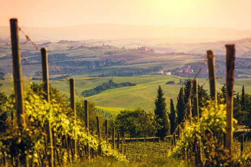 Rolling Landscape「Vineyards in Italy at Sunset, Chianti Region」:スマホ壁紙(11)