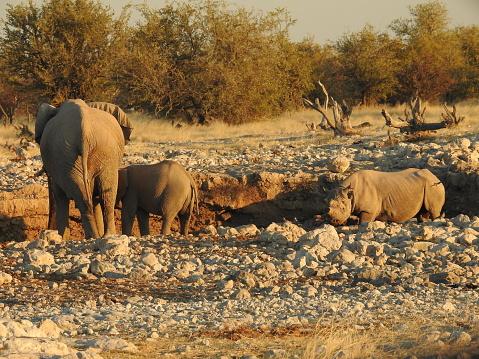 象「Black rhino and elephants at a waterhole」:スマホ壁紙(19)