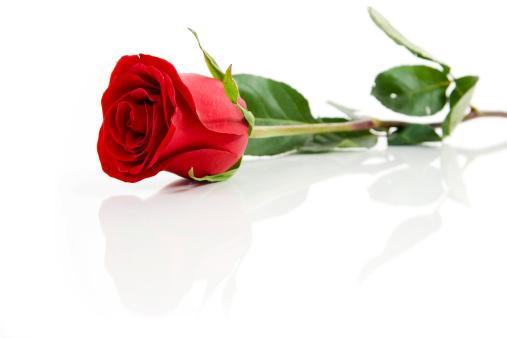 flower「赤いローズ」:スマホ壁紙(11)