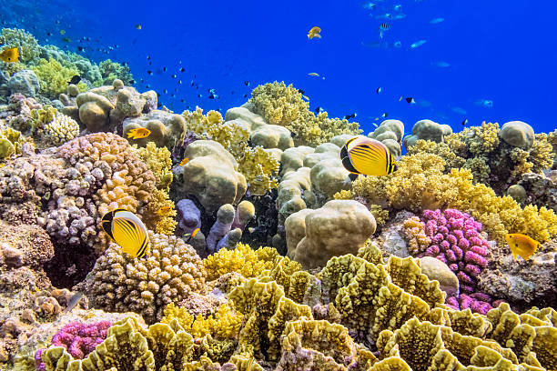 Colorful Coral Reef on Red Sea nearby Marsa Alam:スマホ壁紙(壁紙.com)