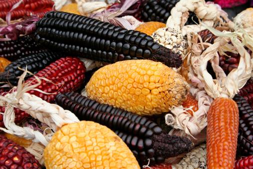 Peruvian Culture「Colorful corn」:スマホ壁紙(13)