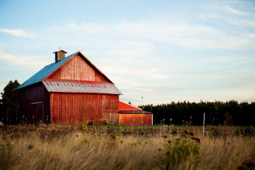 Timothy Grass「Summer Barn」:スマホ壁紙(6)