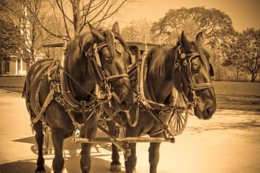 Horse-drawn carriage「ヴィンテージの乗馬&バギー」:スマホ壁紙(9)