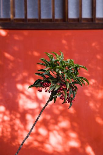 flower「Coralberry」:スマホ壁紙(8)