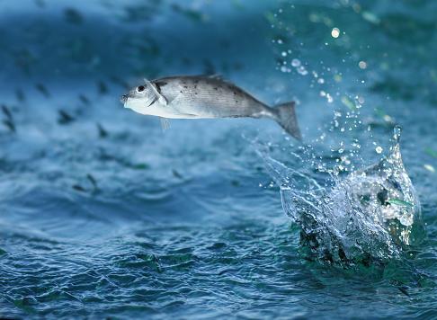 Fish「Small fish jumping out of water」:スマホ壁紙(1)