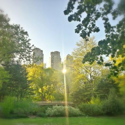 Central Park - Manhattan「Skyscrapers and Central Park, Manhattan, New York, America, USA」:スマホ壁紙(17)