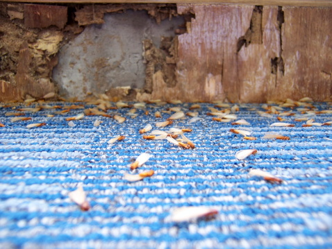 ロマンス「Damage caused by Termites (series)」:スマホ壁紙(4)