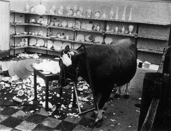 Bull - Animal「Bull In A China Shop」:写真・画像(2)[壁紙.com]