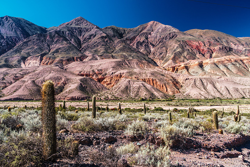 Vibrant Color「Column and some Saguaro (multiple arms) Cacti dot the Humahuaca Ravine against a background of brightly multi-coloured mountains and azure blue sky, Humahuaca, NW Argentina」:スマホ壁紙(5)