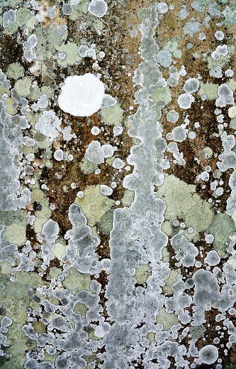 Isle of Man「Variagated green, grey and white lichen covering a tomb stone」:スマホ壁紙(19)