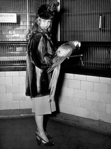 鳥「Veronica Lake」:写真・画像(5)[壁紙.com]