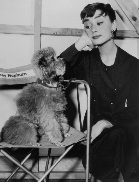上半身「Hepburn And Poodle」:写真・画像(14)[壁紙.com]