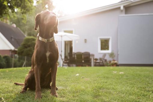 Sunbeam「Germany, Eggersdorf, dog sitting on lawn in garden」:スマホ壁紙(10)