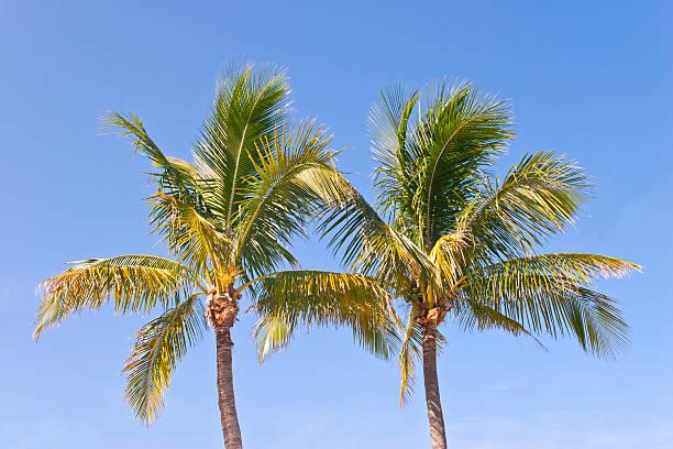 Two Palm Trees against blue Sky:スマホ壁紙(壁紙.com)