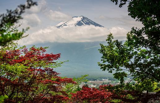 桜「日本ではマウント富士桜木の自然夏」:スマホ壁紙(17)