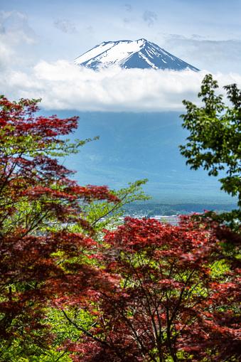 桜「日本ではマウント富士桜木の自然夏」:スマホ壁紙(18)