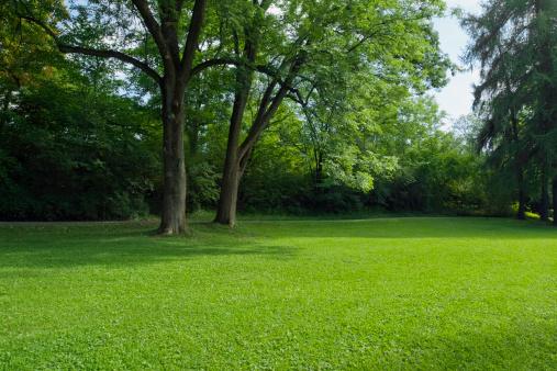 落葉樹「グリーンパーク、大きな旧 decideous の木となっております。」:スマホ壁紙(12)