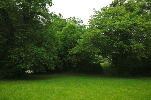 Bush「Green park  with large old decideous trees and shaded areas.」:スマホ壁紙(7)