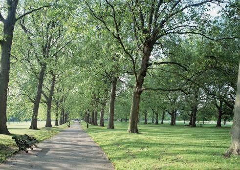 Public Park「Green Park」:スマホ壁紙(1)