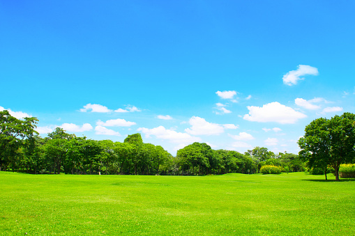 Grass「Green park and tree with blue sky」:スマホ壁紙(4)