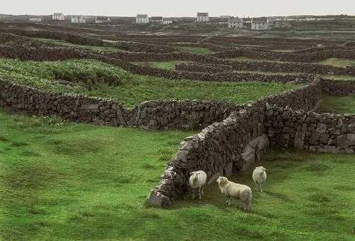 Croft「Aran Islands sheep pasture.」:スマホ壁紙(18)