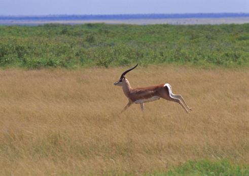 Gazelle「Grant Gazelle」:スマホ壁紙(19)
