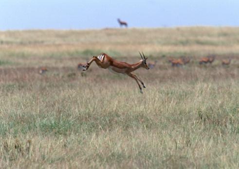 Gazelle「Grant Gazelle」:スマホ壁紙(16)