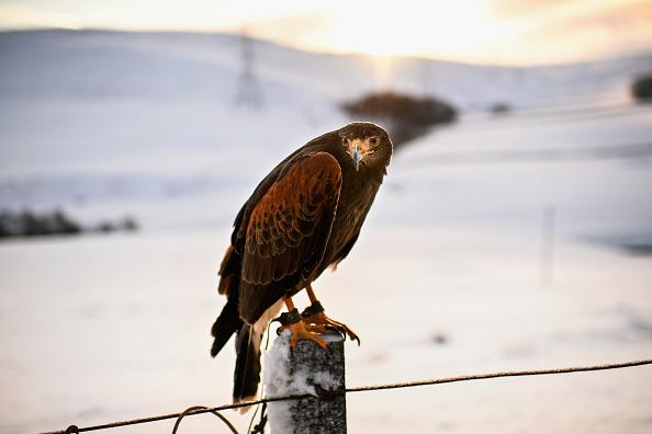 雪「Snow From Storm Fionn Covers Southern Scotland」:写真・画像(10)[壁紙.com]