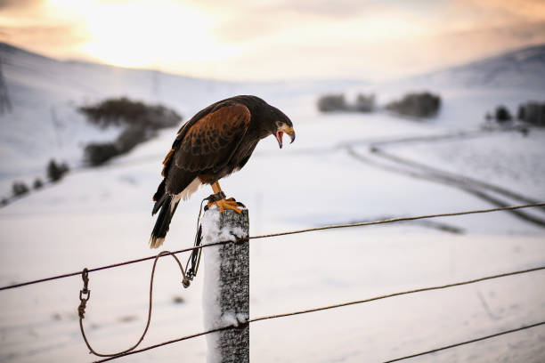 雪「Snow From Storm Fionn Covers Southern Scotland」:写真・画像(11)[壁紙.com]