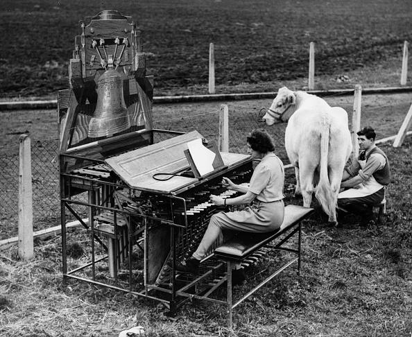 楽器「Milk Music」:写真・画像(6)[壁紙.com]