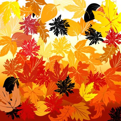 セイヨウカジカエデ「Autumn」:スマホ壁紙(1)