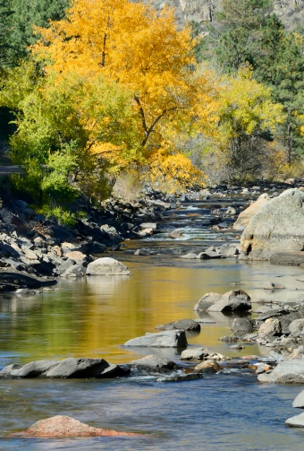 Aspen - Colorado「Autumn picture of the Poudre river with trees and rocks」:スマホ壁紙(2)