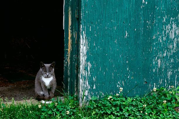 Cat in a doorway:スマホ壁紙(壁紙.com)