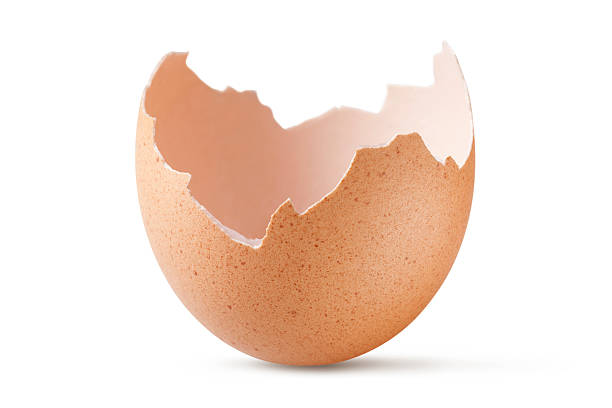 Eggshell:スマホ壁紙(壁紙.com)