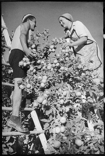 Uzbekistan「Harvest」:写真・画像(3)[壁紙.com]