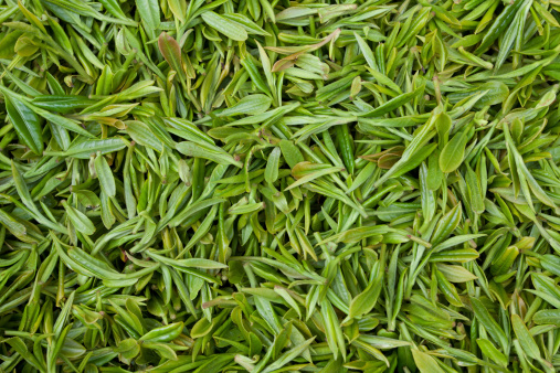 Indigenous Culture「Fresh tea leaves background」:スマホ壁紙(12)
