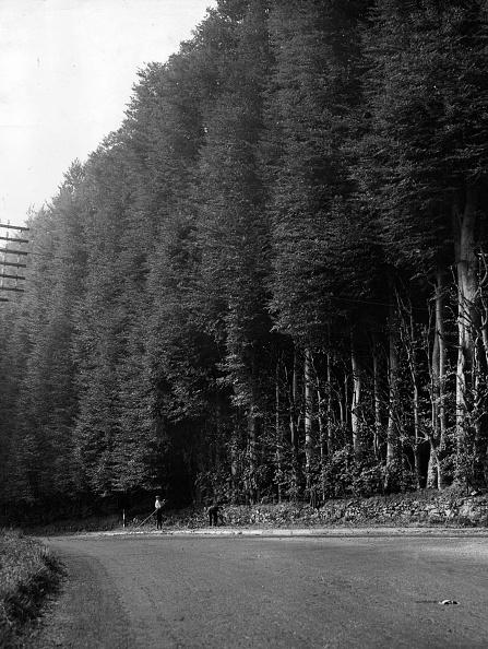 Beech Tree「Beech Hedge」:写真・画像(12)[壁紙.com]