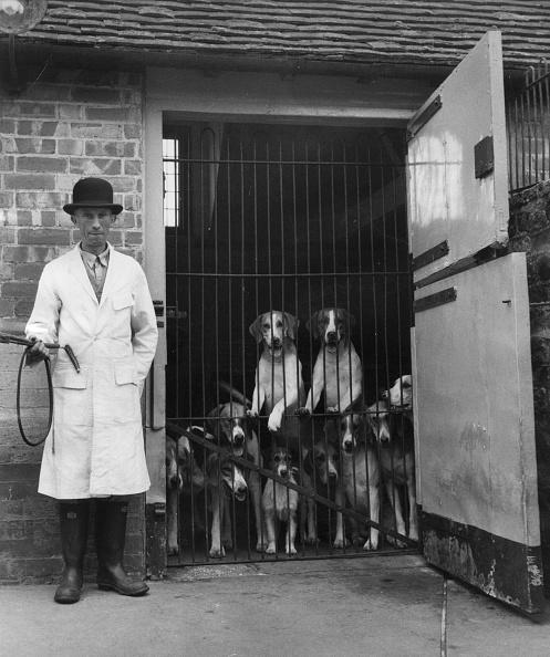 Working Animal「Hound Pound」:写真・画像(14)[壁紙.com]