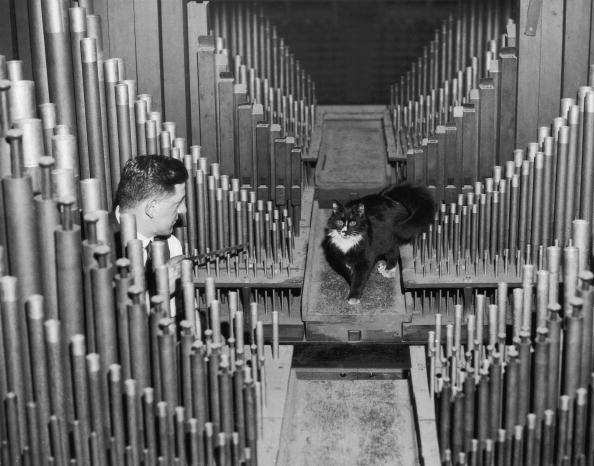 楽器「Organ Dweller」:写真・画像(16)[壁紙.com]
