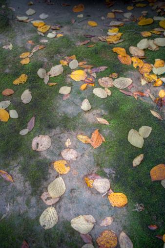秋+京都「Colours of autumn」:スマホ壁紙(5)