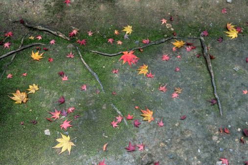 秋+京都「Colours of autumn」:スマホ壁紙(7)