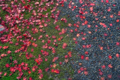 秋+京都「Colours of autumn」:スマホ壁紙(10)