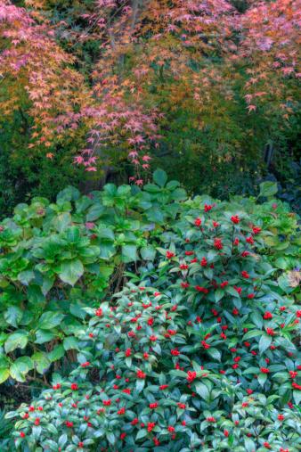 秋+京都「Colours of autumn」:スマホ壁紙(13)