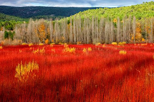 秋「Spain, Cuenca, Wicker cultivation in Canamares in autumn」:スマホ壁紙(16)