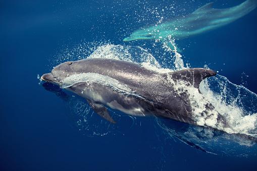 Dolphin「Discovering Greece」:スマホ壁紙(18)