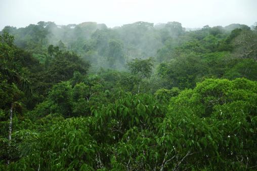 アマゾン熱帯雨林「アマゾンの天蓋」:スマホ壁紙(14)