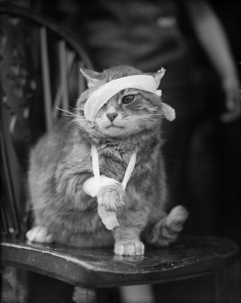 猫「Bandaged Cat」:写真・画像(15)[壁紙.com]